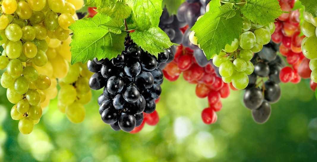 09 376 78 - Державна підтримка розвитку хмелярства, закладення молодих садів, виноградників та ягідників.